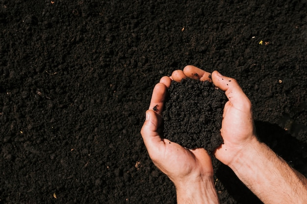 Flat lay hands holding soil