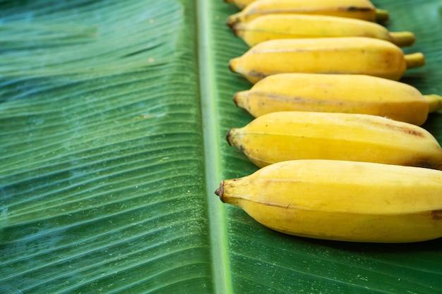 緑のバナナの葉の上に黄色のバナナのフラットレイレイアウト。エコフード。