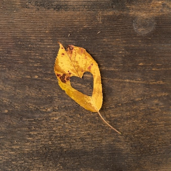 Flat lay leaf with heart shaped cut