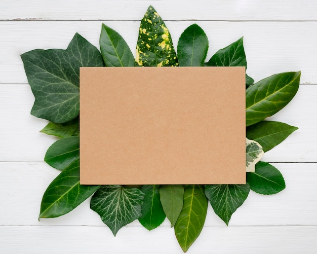 Flat lay of leafs concept with copy space