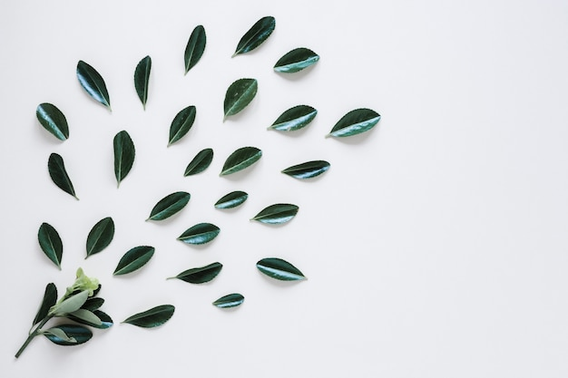 Flat lay of leaves with copyspace