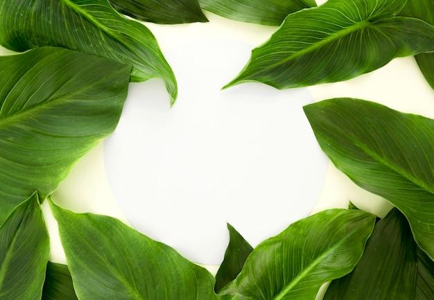 Lay piatto di un sacco di foglie con copia spazio