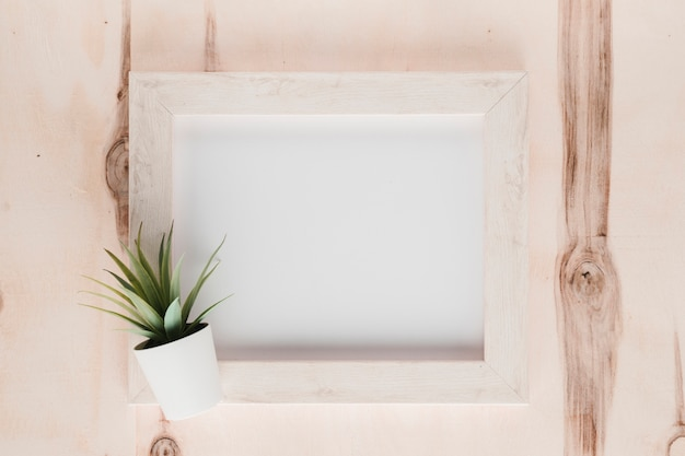 Flat lay minimalist frame with plant