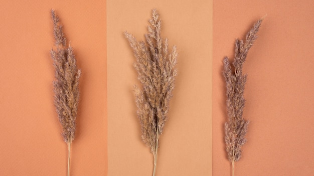 Flat lay of monochromatic assortment of dried lavender