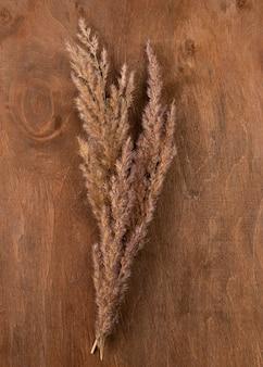 Flat lay of monochromatic dried grass