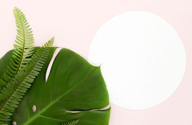 Flat lay of monstera leaf and ferns with copy space