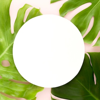Flat lay of monstera leaves with copy space