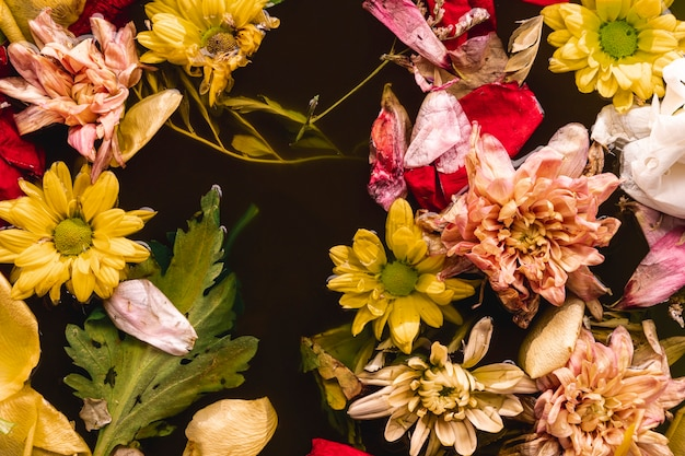 Flat lay multi colored flowers in water