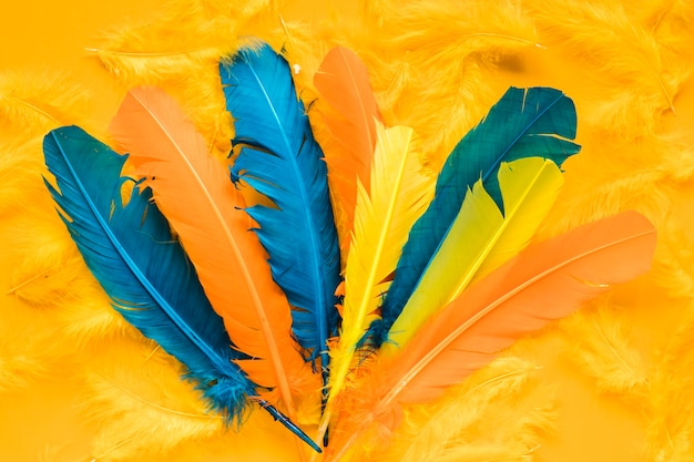 Flat lay of multicolored feathers for carnival