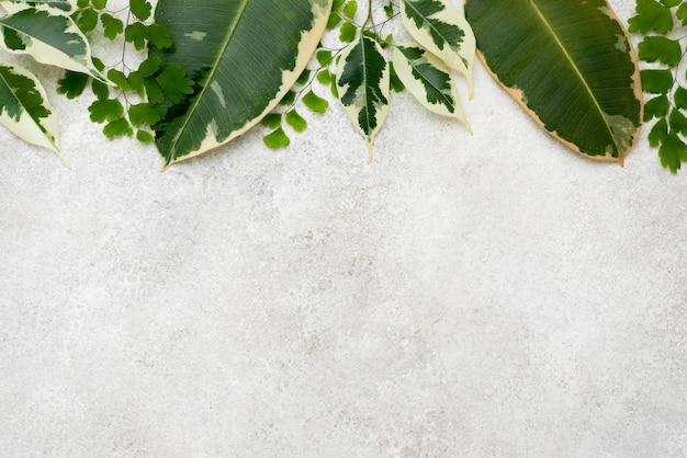 복사 공간을 가진 식물 잎의 구색의 평면 누워