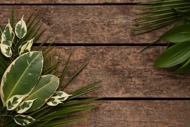 Плоская планировка красивого ассортимента листьев растений с копией пространства