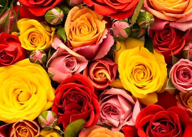 아름답게 피어난 화려한 꽃의 평평한 누워