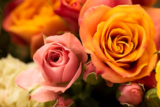 Плоская планировка красиво распустившихся ярких розовых цветов