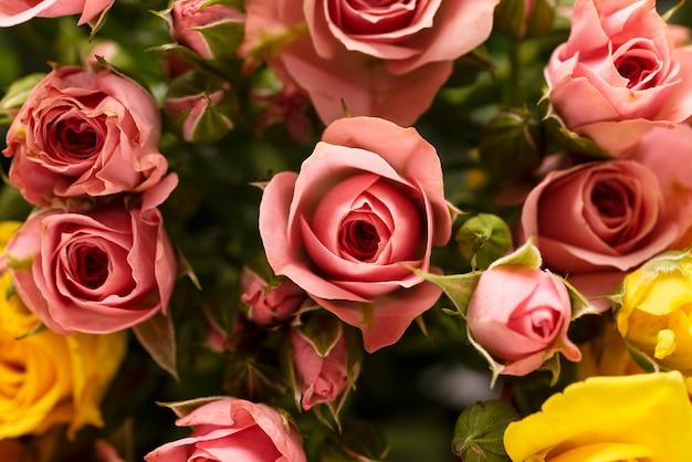 美しく咲いた色とりどりのバラの花のフラットレイ
