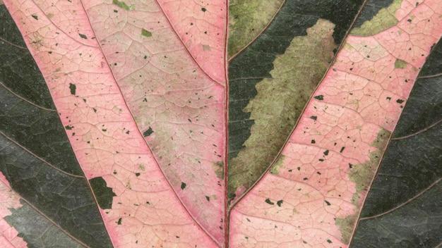 色付きの紅葉パターンのフラットレイ