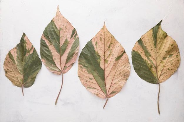 Плоская планировка из цветных осенних листьев