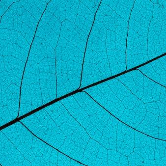Плоская планировка цветных листьев с прозрачной текстурой