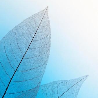 컬러 투명 나뭇잎 텍스처의 플랫 누워