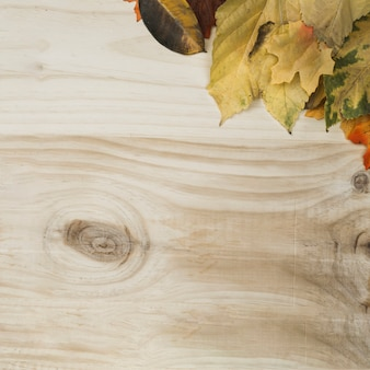 Flat lay of fall leaves designed in frame corner