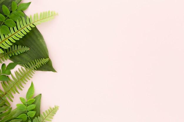 シダと葉のフラットレイアウトコピースペース