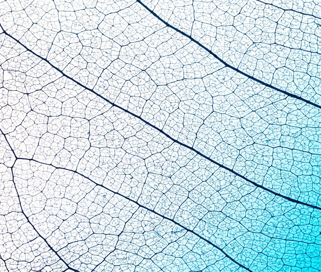 葉のラミナテクスチャのフラットレイアウト