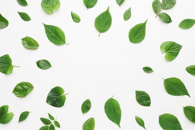 복사 공간 잎 프레임 개념의 평평하다