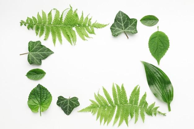 Плоский рельеф листьев концепции кадра с копией пространства