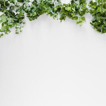 Copyspaceと葉のフラットレイアウト