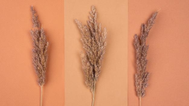 乾燥ラベンダーの単色の品揃えのフラットレイ