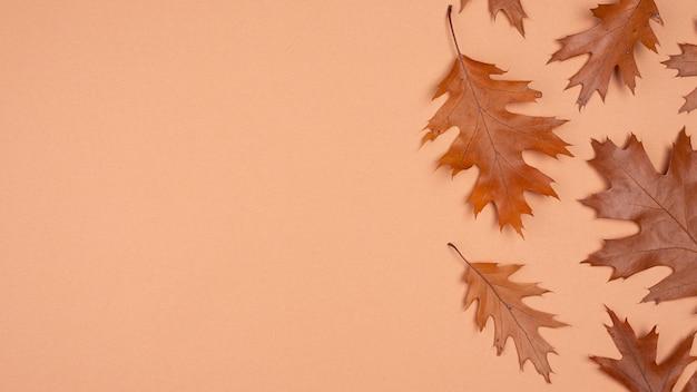 복사 공간 단색 잎의 평평한 누워