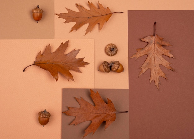 잎과 도토리의 단색 선택의 평평한 누워