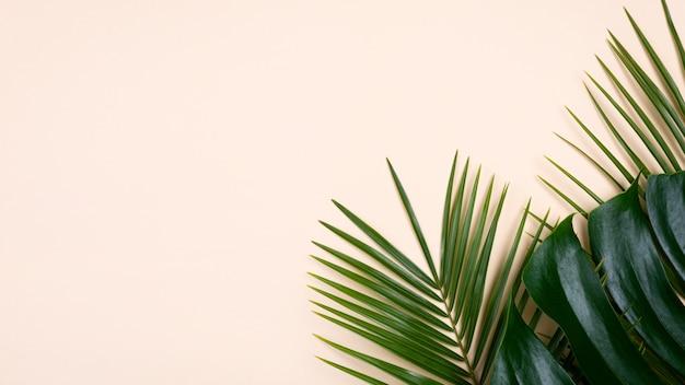 몬스 테라 및 복사 공간이있는 다른 잎의 평면 누워