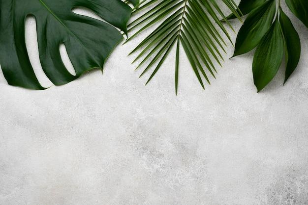 Плоская планировка монстеры и других листьев