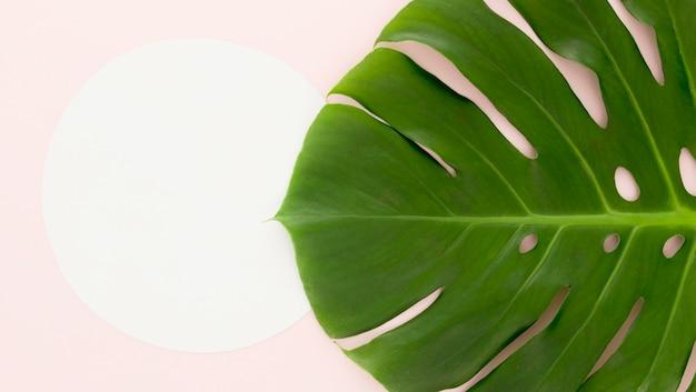 Плоская планировка листьев монстеры