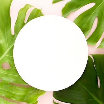 몬스 테라 잎의 평면 배치 복사 공간