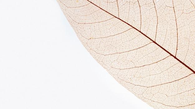 투명한 색의 잎의 평평한 누워