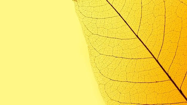 Плоская планировка прозрачной текстуры листьев с цветным оттенком и пространством для копирования