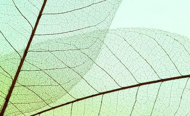 Плоская планировка прозрачных листьев цветного оттенка