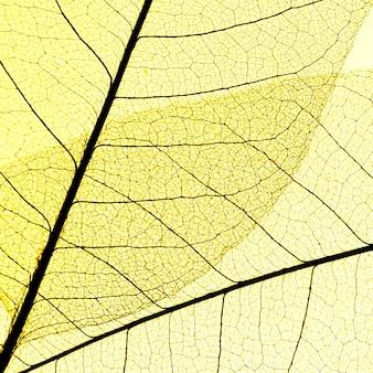 Плоский слой прозрачных листьев