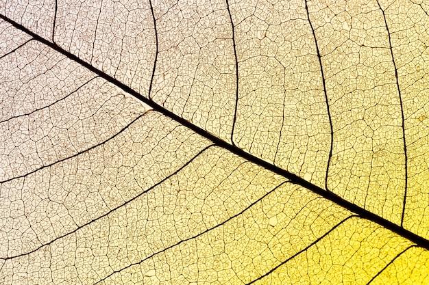 Плоский слой полупрозрачного листа с цветным оттенком
