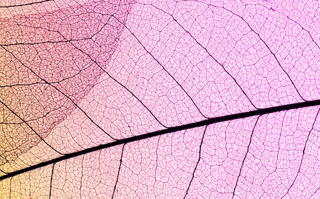 Плоский слой полупрозрачных листьев с цветным оттенком