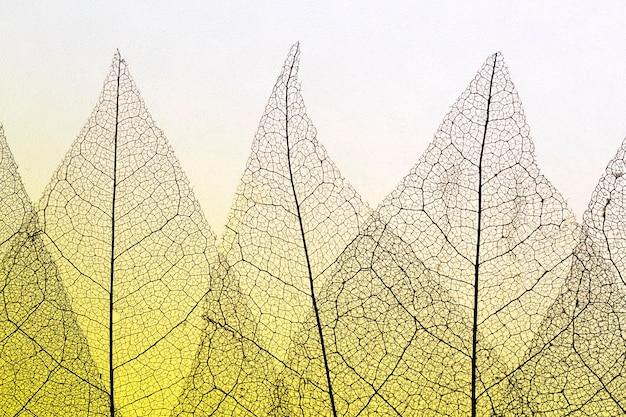 Плоский слой полупрозрачных листьев