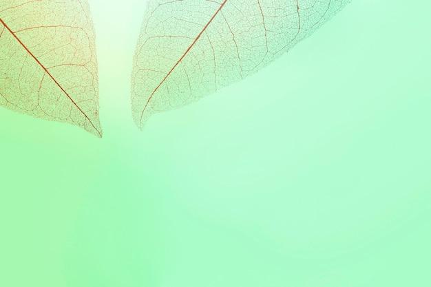 Плоский слой прозрачных листьев с разноцветным оттенком