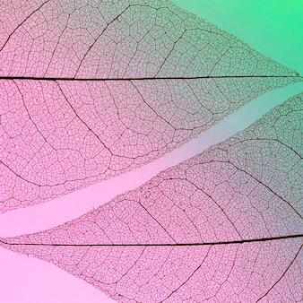 透明な葉のフラットレイアウト