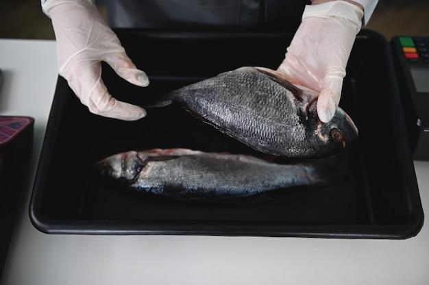 두 마리의 신선한 지중해 생선, 팔레트에 있는 도라도, 해산물 가게에 있는 생선가게의 손이 평평하게 놓여 있습니다. 음식 배경입니다. 지중해 어시장