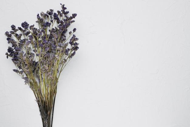 Плоская планировка полевых цветов с copyspace