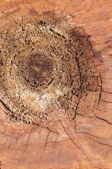 木の質感のフラットレイ