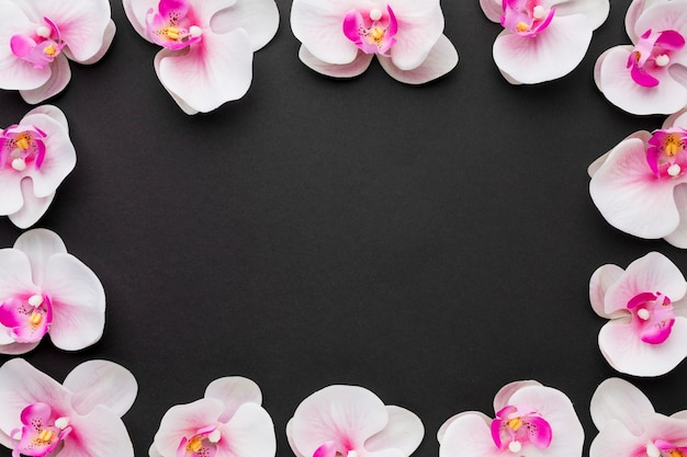 Flat lay orchids frame