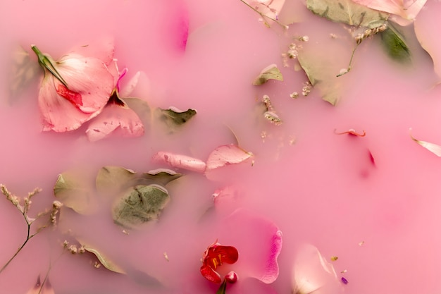 Flat lay orchids and roses in pink colored water