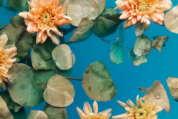 Flat lay pale chrysanthemums in blue water